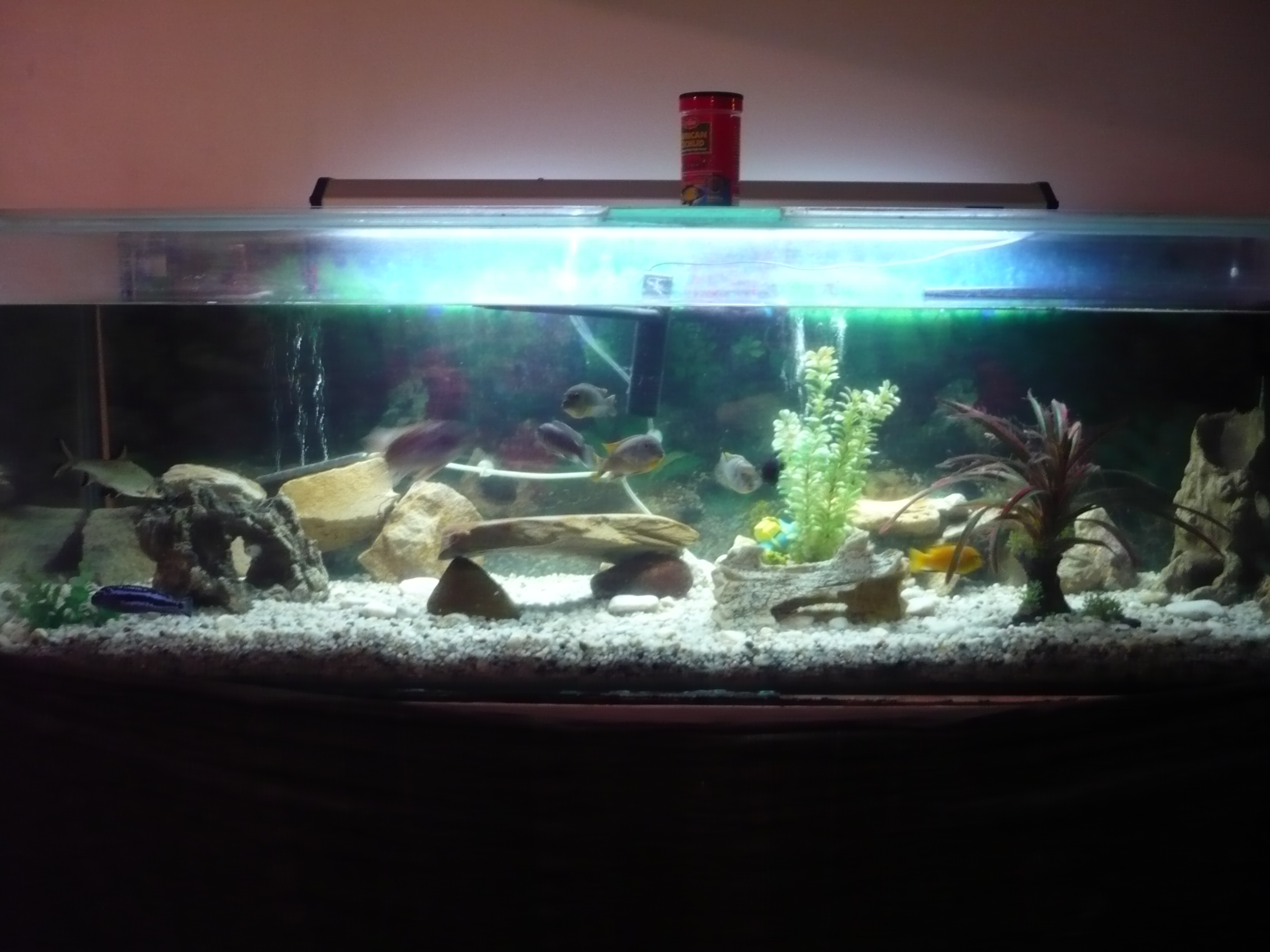 Turtle tank for sale qld ft fish turtle tank and stand for Fish tank turtles