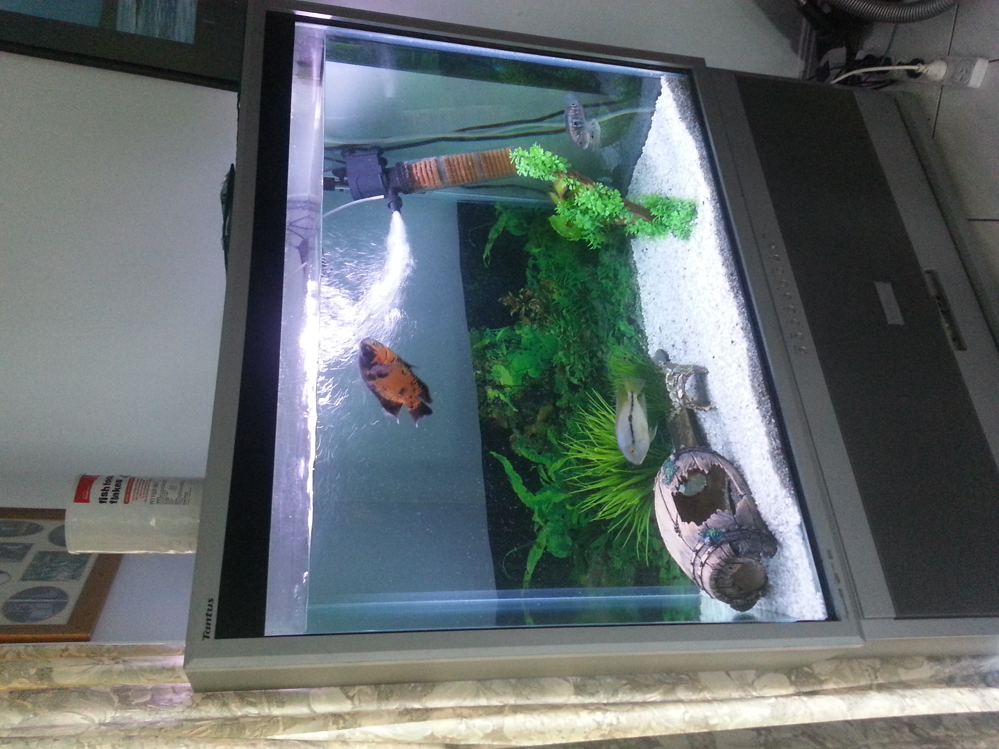 Boost classifieds buy sell used cars bikes boats for Custom made fish tanks